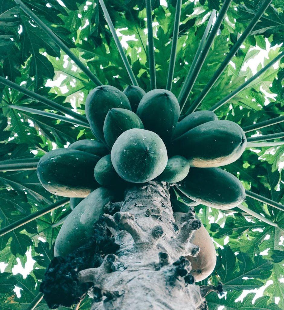 papaye
